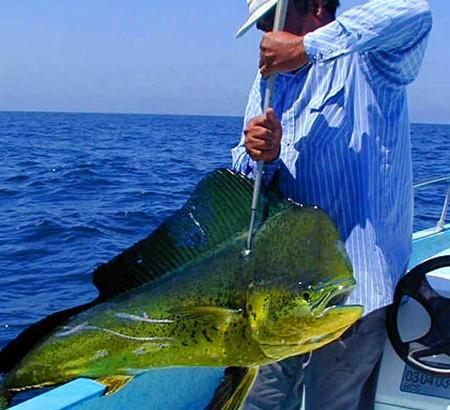 Catch Pompano Dolphin Fish