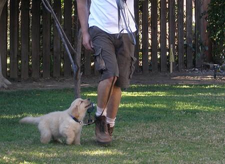 Dog  Follow You