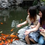How to Feed Fish in your Garden