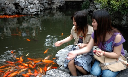 Feeding Fish in Garden