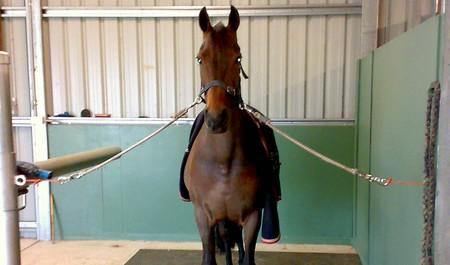 Horse Cross-tie