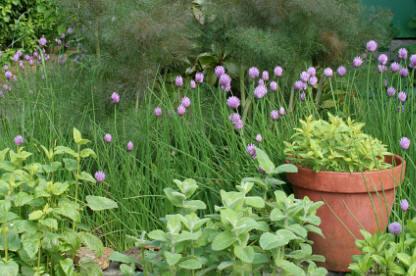 Informal Herb Garden
