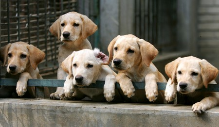 How to find the Right Puppy  Right Puppy 5