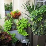 How to Add Visual Effect to Your Balcony Garden