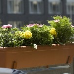 How to Protect Your Balcony Garden