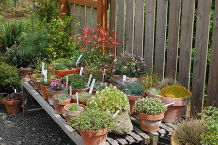 How to Change Composts in Container Garden  Container Garden1