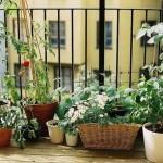 How to Decorate Screening in Your Balcony Garden