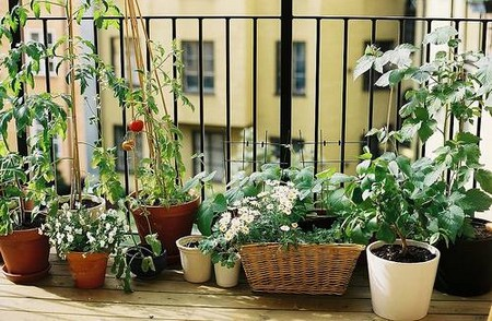 Decorate Screening Balcony Garden