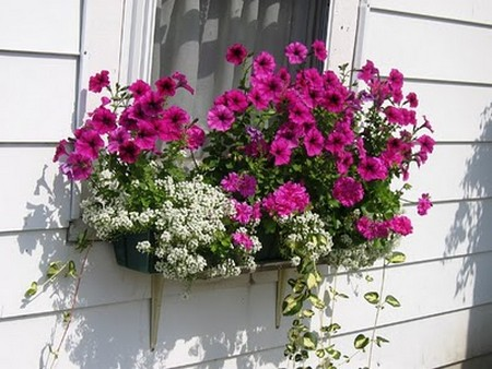 Hang Baskets in Window Garden