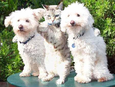 Harmony  Dogs
