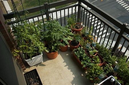 Maintain Plants Balcony