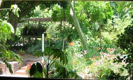 How to Plant in Mini Gardens  Mini Gardens 5