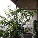 How to Create an Internal Partition in Balcony Garden