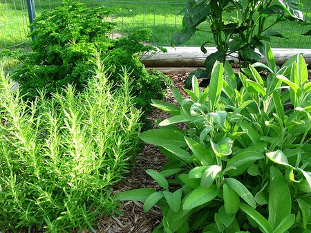 Pest Disease  Herb Garden