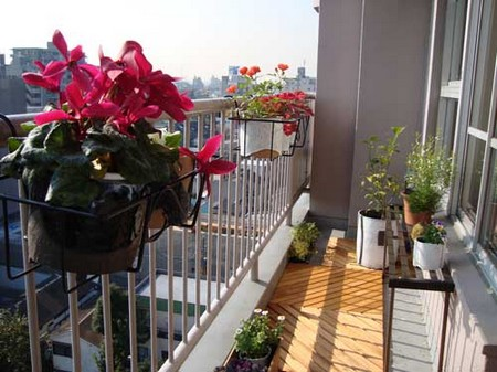 Plants for Balcony Garden