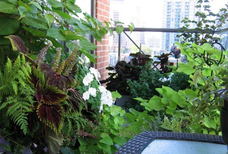 Plants in Balcony Garden