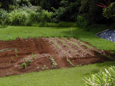 Soil Condition in Garden
