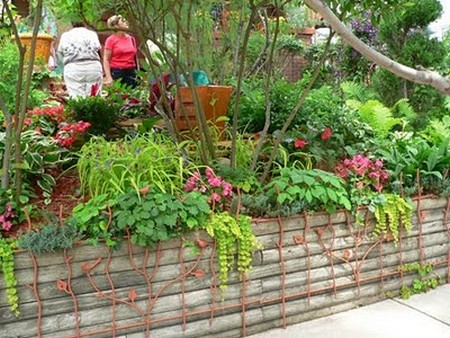 How to Grow Climbers and Wall Shrubs in Small Garden  Wall Shrubs Small Garden