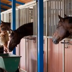 How to Pick Bedding for Your Horse