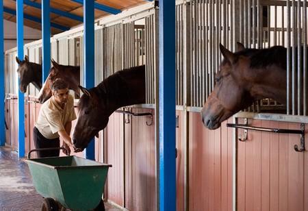 Bedding Horse