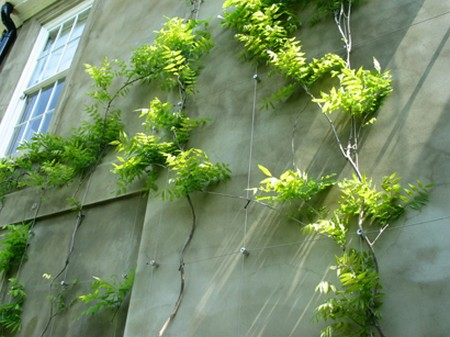 How to Plant a Hedge, Climber and Wall Plants  Climber Wall Plants