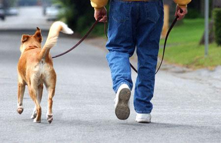 Control Dog  Lead