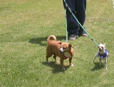 How to Train your Dog for Leash less Walking  Dog Leash less Walking