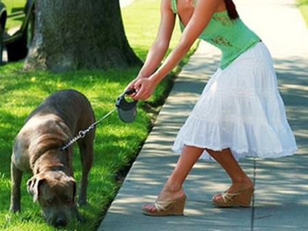 How to Train your Dog to find Things  Dog find Things 5