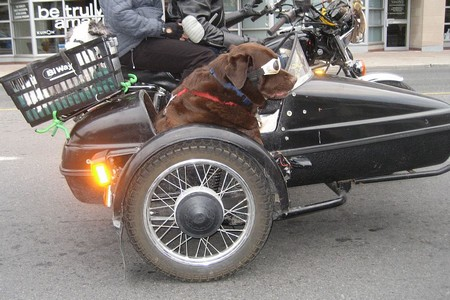 Dog out in Motor bike