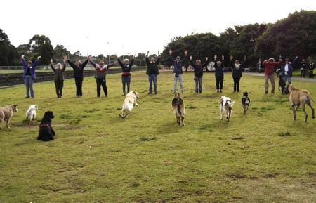 How to Train your Dog to Master the off lead recall  Dog recall1