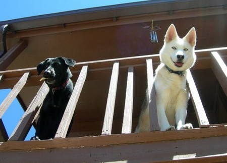 How to Train your Dog regarding House Manners  Dog regarding House Manners