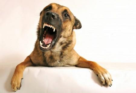 Dog's Phobias