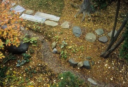 Drainage Problem Garden