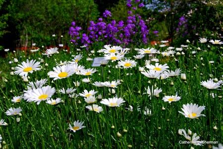 Garden  planted feed