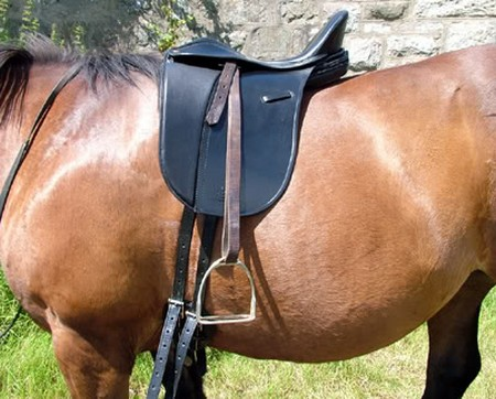 Good Position  Saddle