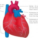 How to Deal with Heart and Blood Vessel Problems