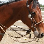 How to Select the Right Bit for Your Horse