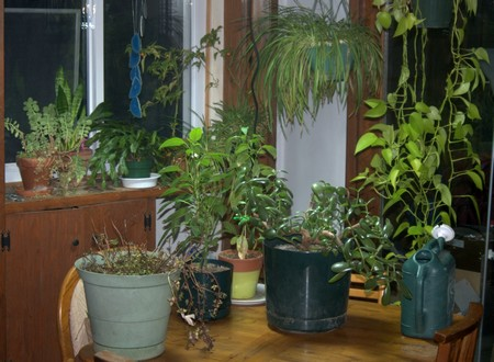 How to Create an Indoor Garden Indoor Garden