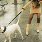 How to Train your Dog for Leash-less Walking