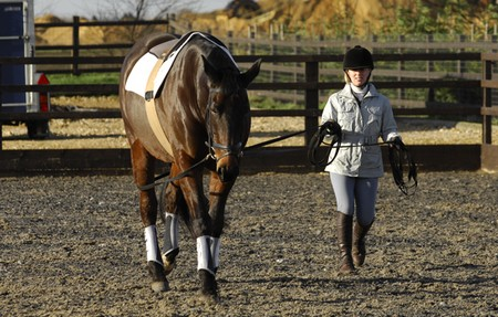 How to Use Long Reining  Long Reining