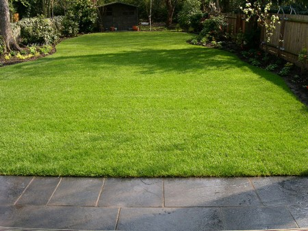 How to Choose and Use a New Lawn in Your New Lawn1