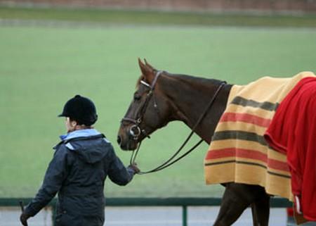 Prevent Ailments  Horse