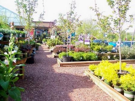 Trees and Shrubs garden