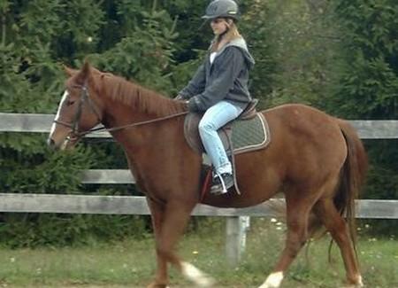 Understand  Horse's Behavior