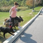 How to Teach your dog to walk Correctly on the Lead