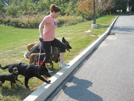How to Teach your dog to walk Correctly on the Lead  dog to walk Correctly