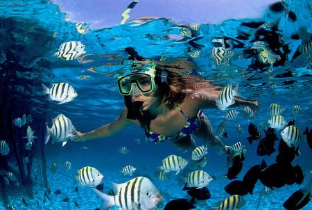 How to Dive in the Caribbean  Dive in Caribbean