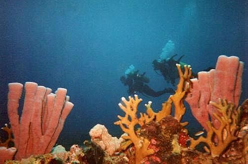 How to Dive in the Red Sea  Dive in Red Sea
