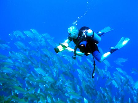 How to Plan a Diving Trip  Diving Trip
