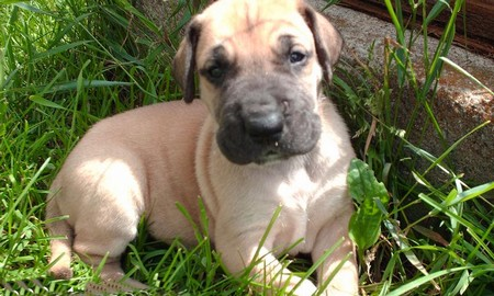 How to Undergo General Behavior Modification with your Dog  General Behavior Puppy 5